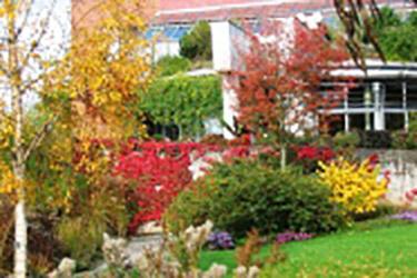 Der Garten im Herbst – Pflege der Stauden und Gehölze