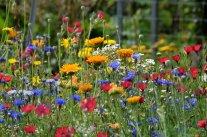 Naturgärten: die Alternative zu Schotterflächen