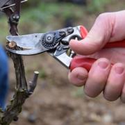 2021 – Gartentipp 05 – Wir warten auf das Frühjahr – Gartenarbeiten im Februar